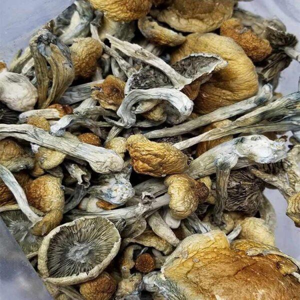 Buy Ecuadorian Magic Mushrooms
