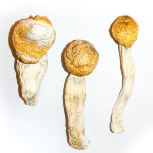 Penis Envy Magic Mushrooms